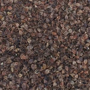 buchweizenschalen